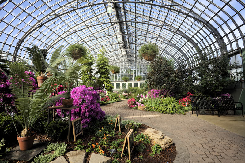 Inside the arboretum at Garfield Park Conservatory