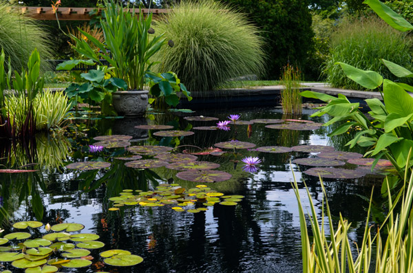 pond with lily pads at Wave Hill Gardens